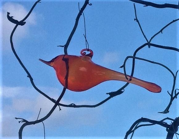 Ptáček oranžový