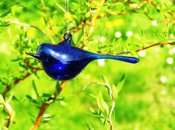 Ptáček modrý